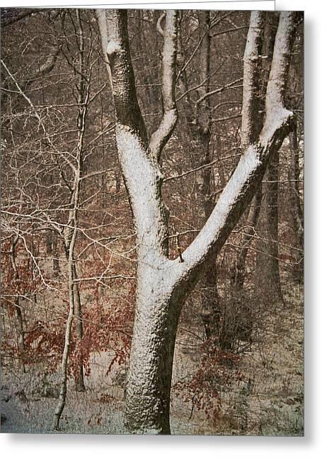 Winter Woods Greeting Card by Odd Jeppesen