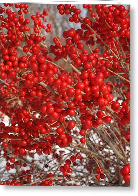 Winterberries Greeting Card by Michael Flood