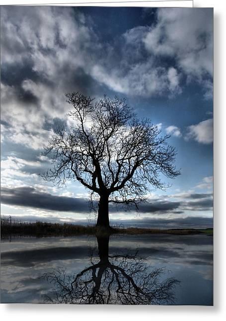 Wintering Oak Tree Greeting Card