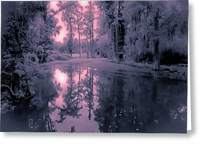 Winterland In The Swamp Greeting Card