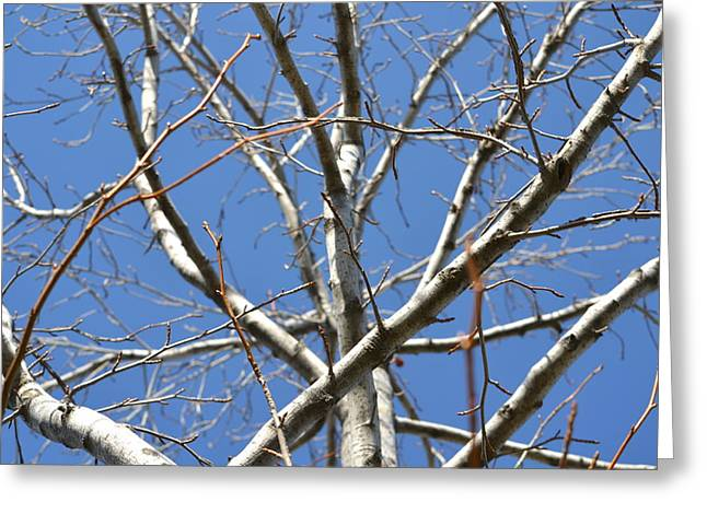 Winter's Branches Greeting Card by Naomi Berhane
