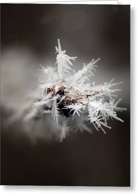 Winters Frost Greeting Card
