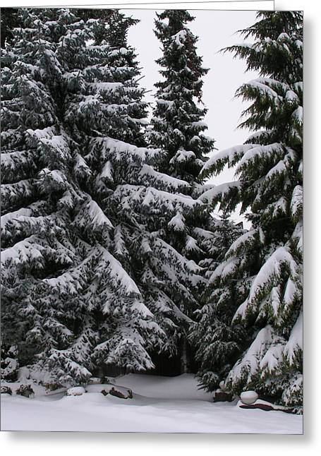 Winters Silence Greeting Card
