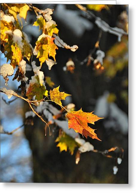 Wintery Pigment Greeting Card by JAMART Photography