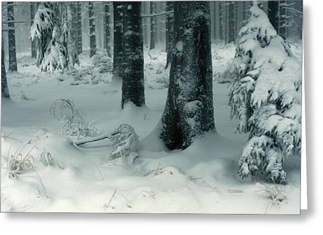 Wintry Fir Forest Greeting Card by Ulrich Kunst And Bettina Scheidulin