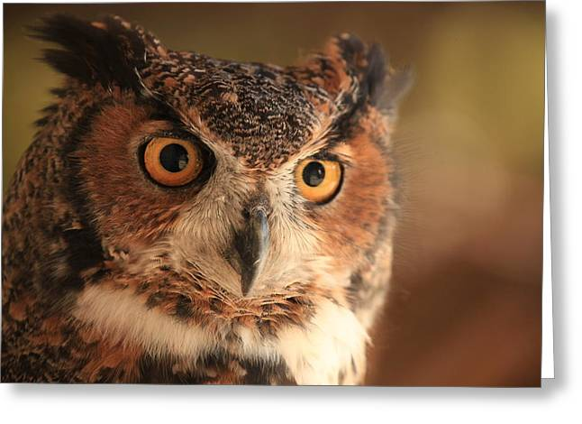 Greeting Card featuring the photograph Wise Old Owl by Doug McPherson