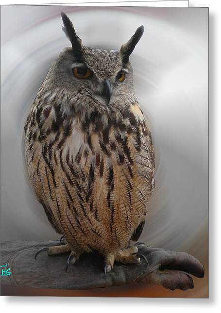 Wise Owl 3 Living In Spain Greeting Card by Colette V Hera  Guggenheim