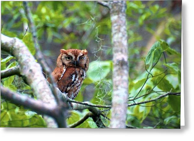 Wise Young Owl Greeting Card