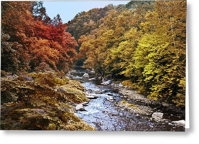 Wissahickon Creek In Fall Greeting Card by Bill Cannon