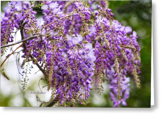 Greeting Card featuring the photograph Wisteria by Joan Bertucci