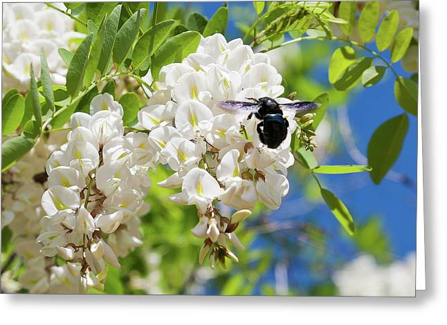 Wisteria With June Bug Greeting Card