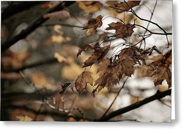 Withered Leaves Greeting Card
