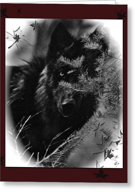 Wolf Black And White Designer Greeting Card by Debra     Vatalaro