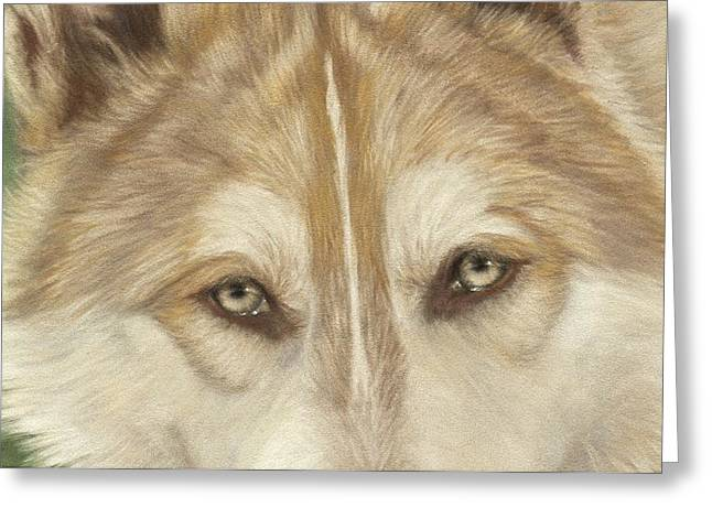 Wolf Eyes Greeting Card by Teresa LeClerc