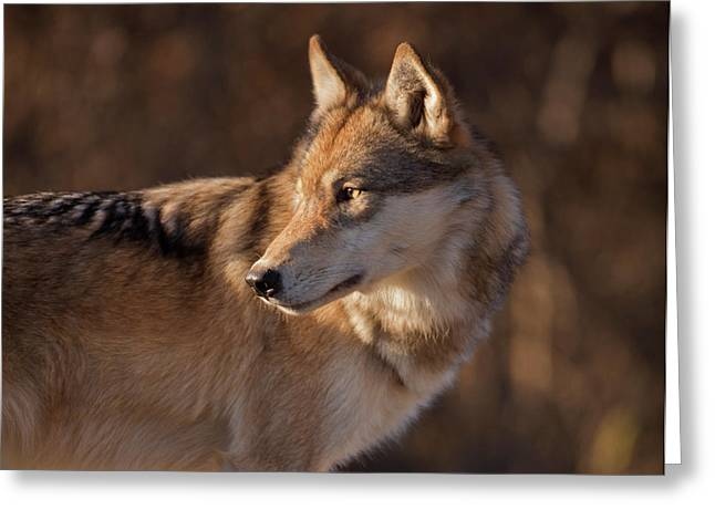 Wolf In Profile Greeting Card