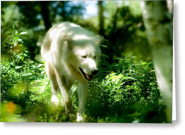 Wolf In The Forest Greeting Card