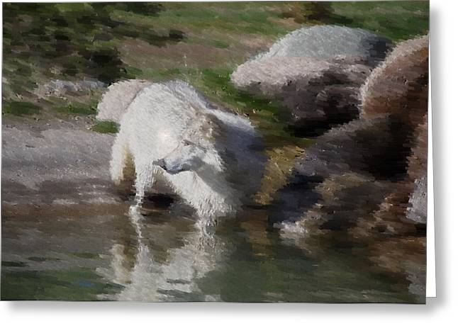 Wolf Greeting Card by Kevin Bone