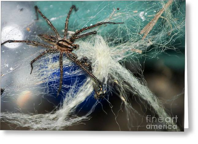 Wolf Spider Eating Greeting Card by Art Hill Studios
