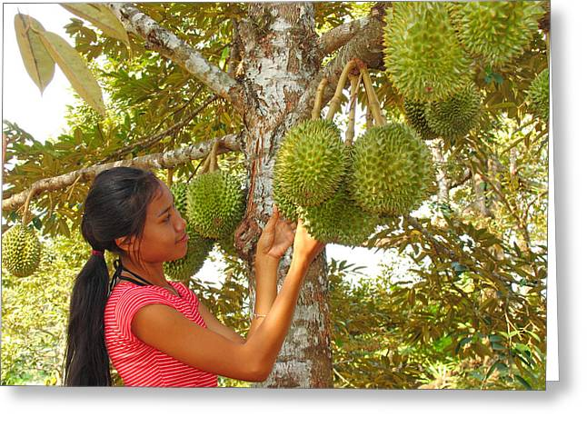 Woman Inspecting Durian Fruit Greeting Card by Bjorn Svensson