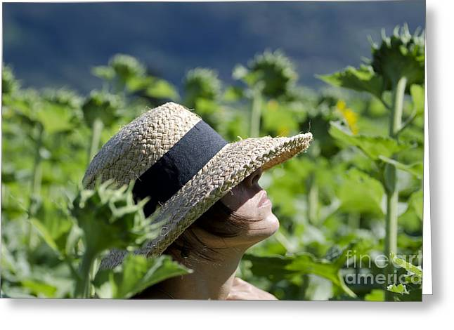 Woman With Straw Hat Greeting Card by Mats Silvan
