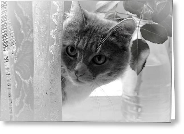 Wondering. Kitty Time Greeting Card