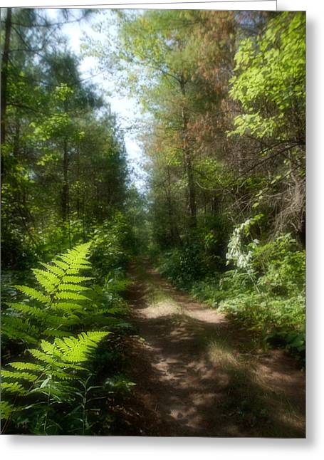 Wondrous Path Greeting Card by Yves Pelletier