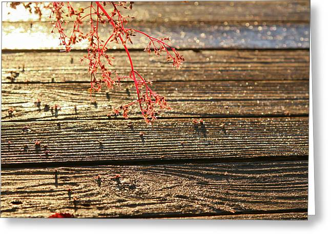 Wood Deck Red Sprig Greeting Card
