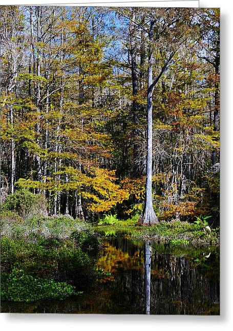 Wood Duck Pond Greeting Card by Melanie Moraga