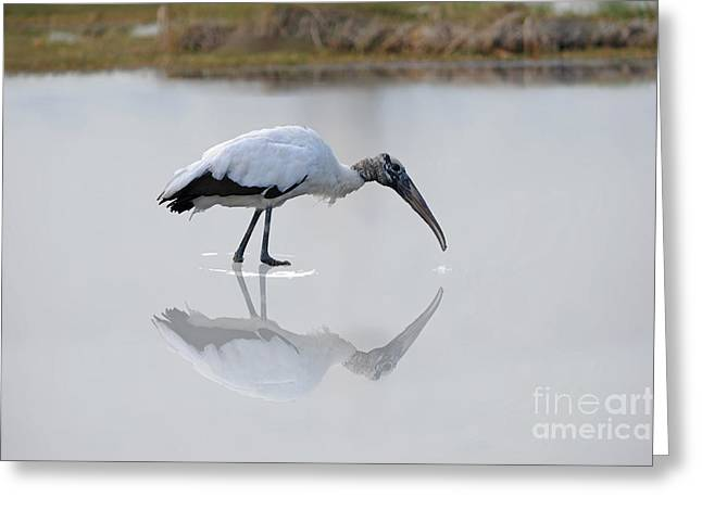 Greeting Card featuring the photograph Wood Stork Eating by Dan Friend