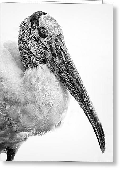 Wood Stork Greeting Card by Ercole Gaudioso