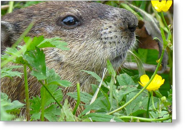 Woodchuck Greeting Card