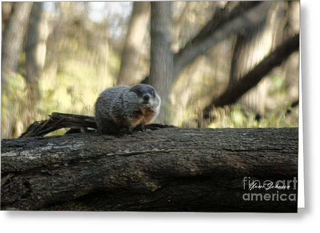 Greeting Card featuring the photograph Woodchuck by Yumi Johnson
