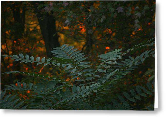 Wooded Dream  Greeting Card by Neal Eslinger