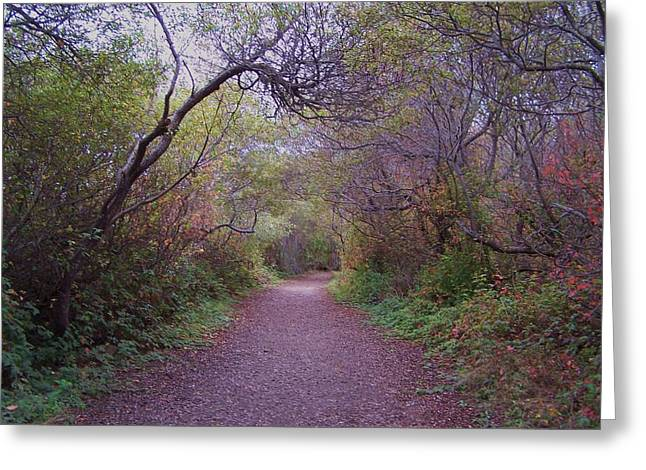 Wooded Trail Greeting Card by Christine Drake