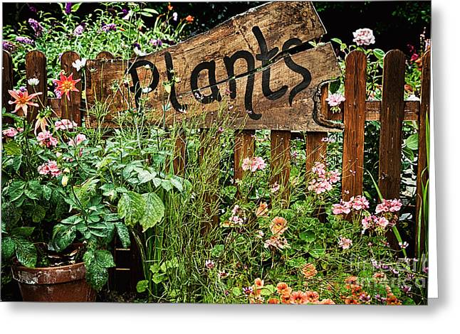 Wooden Plant Sign In Flowers Greeting Card