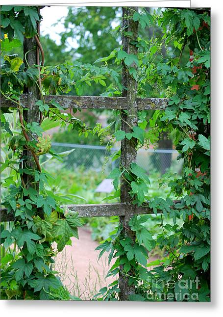 Wooden Trellis And Vines Greeting Card by Nancy Mueller