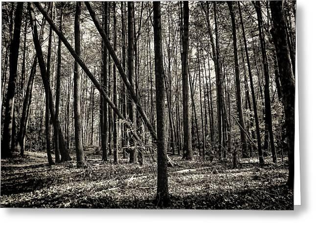 Woodland Greeting Card by Lourry Legarde