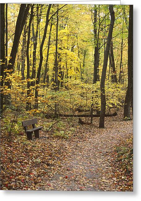 Woodland Respite Greeting Card
