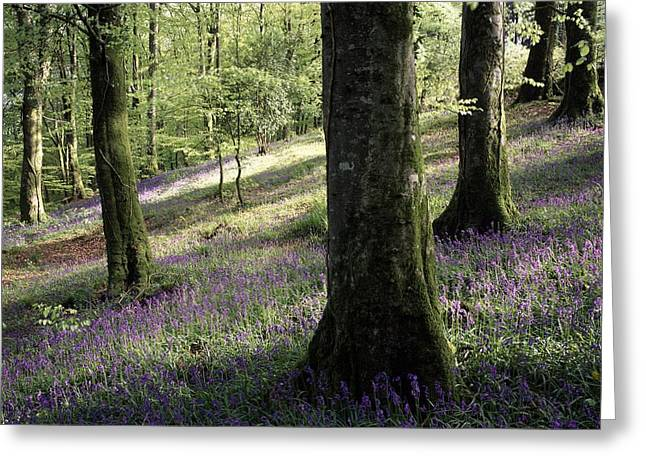 Woods In Spring, Clara Vale Clara Vale Greeting Card by The Irish Image Collection