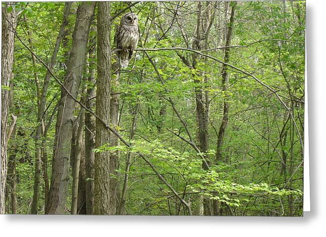 Woody The Barred Owl Mi Greeting Card by Karen King