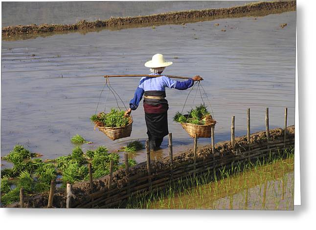 Worker In A Rice Field Greeting Card