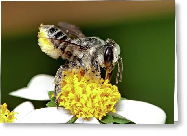 Working Bee Greeting Card by Nick  Shirghio
