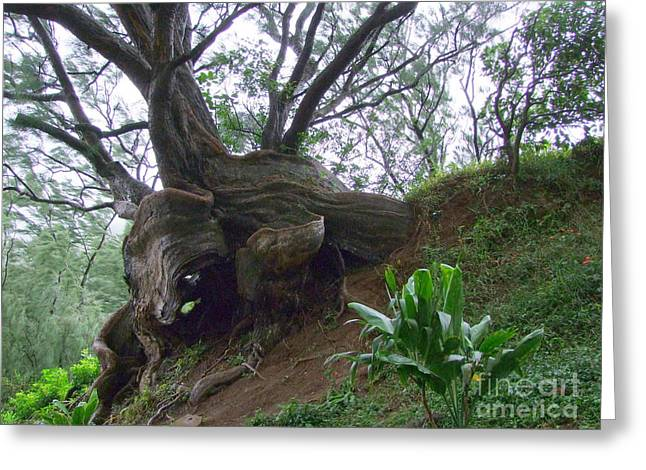 Wrap Around Tree Greeting Card by Mary Deal