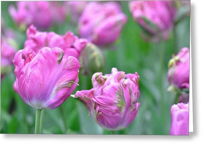 Wrinkled Flowers Greeting Card
