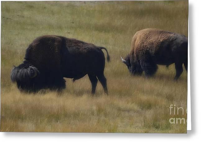 Wyoming Buffalo Greeting Card by Donna Greene