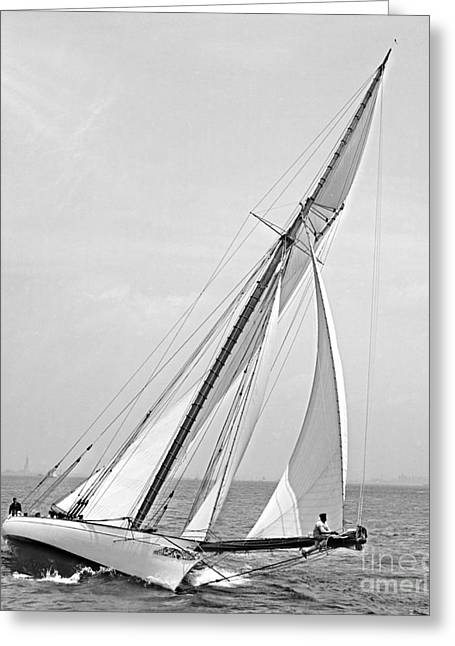 Yacht Shamrock In New York Harbor 1895 Bw Greeting Card by Padre Art