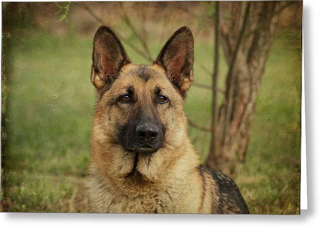 Yahtzee - German Shepherd Greeting Card by Sandy Keeton