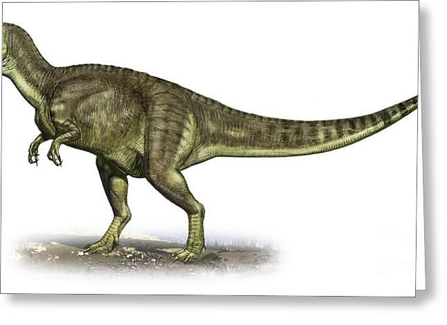 Yangchuanosaurus Shangiouensis Greeting Card by Sergey Krasovskiy
