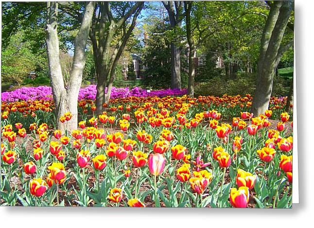 Yellow And Red Tulips Greeting Card