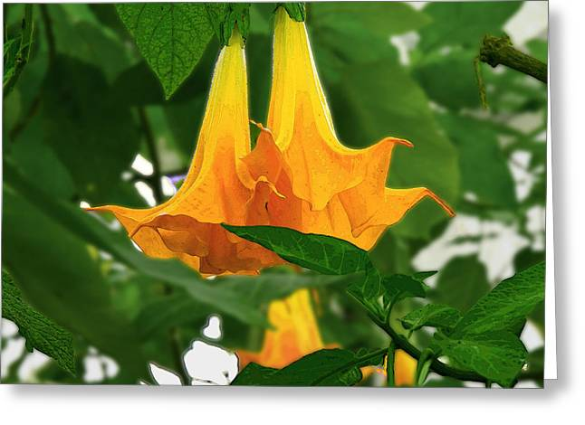 Yellow Angel's Trumpet Flower Greeting Card
